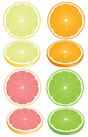 Citrus fruits  Slices of a lemon, orange, lime, a grapefruit isolated on a white background  Vector