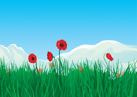 Spring at mountains  Red spring poppies and green grass on background with mountains Stock Vector - 18096087