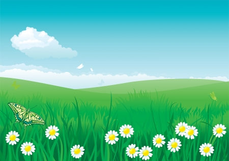 Blossom summer  Vector illustration of summer landscape with butterflies, many flowers on green grass and blue sky with fluffy clouds Stock Vector - 18426005