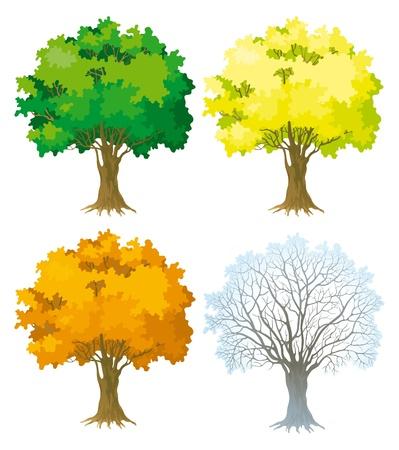 silhouette arbre hiver: Arbre Arbres � quatre saisons avec le vert, arbre feuilles jaune et orange sans feuilles en hiver
