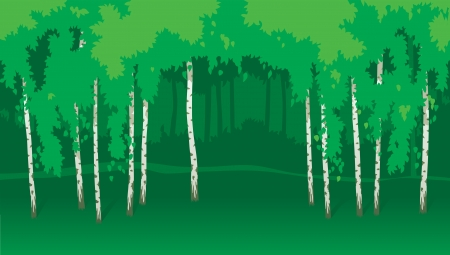 birch forest: Birches  Horizontal vector  landscape with green trees