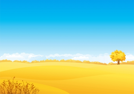 fields  grass: Autumn landscape  Vector landscape of yellow fields with grass and alone tree   Illustration