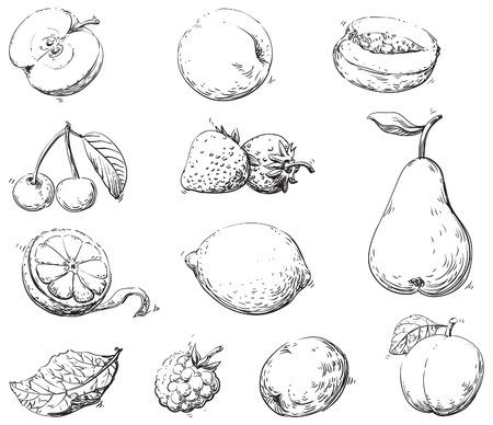 lijntekening: Vruchten Vector set van vruchten bij gravurestijl