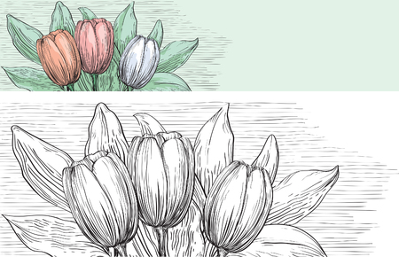 pencil drawn: tulips with many leaves at color and black and white engraving style