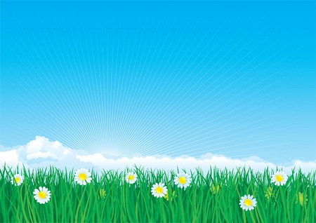 non urban scene: Blossom summer landscape with  flowers on green grass and blue sky with fluffy clouds