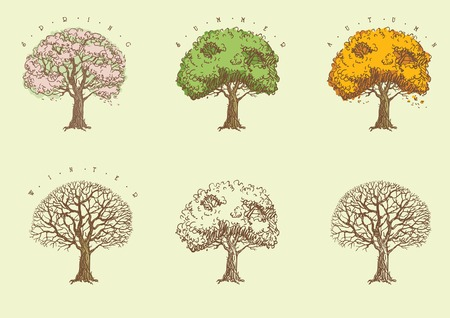 Set of trees at engraving style  Trees with green,  orange and without leaves  and with blossoming  Illustration