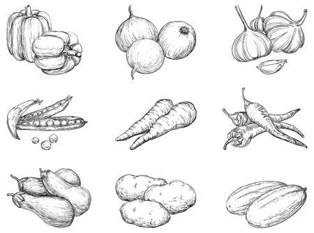 Vegetables  Vector set 1 of vegetables at engraving style Vector