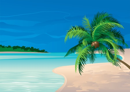 Coconut palm. Vector illustration  of coconut palm tree on a beach