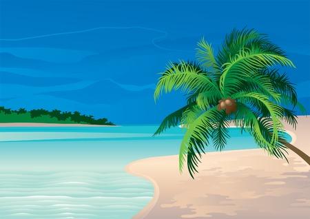Kokospalm. Vector illustratie van de kokosnoot palmboom op een strand