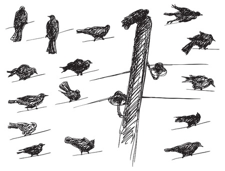 roost: Birds. Vector set of birds Silhouettes on electrical wires