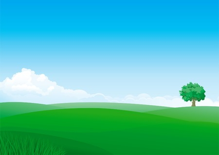 horizon over land: Summer landscape of green fields with grass and alone tree.
