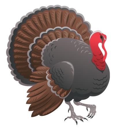 Pavo. Ilustración vectorial de acción de gracias Turquía-polla aisladas sobre fondo blanco Ilustración de vector
