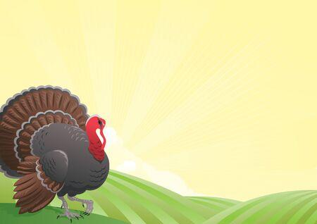 Truthahn. Vector Dank Landschaft von Feldern und die Türkei-Hahn Standard-Bild - 46113145