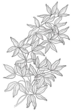 tree line: Vintage floral background. Vector of branch with many leaves at engraving style Illustration