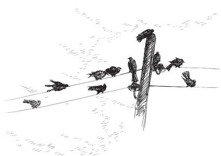 oiseau dessin: Des oiseaux. Vecteur de fond des oiseaux Silhouettes sur les fils électriques Illustration
