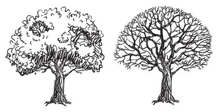 裸の木。2 つのベクトルの裸木が落書きスタイル手の図面