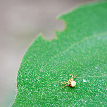 Tiny spider on a green leaf covered by dew Stock fotó