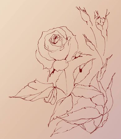 Bouquet of roses. Trace of freehand drawing Vector