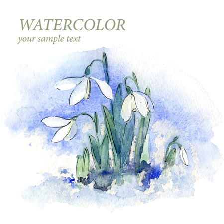 the womanly: Spring snowdrop flowers with snow in the forest Watercolor. Vector. Background