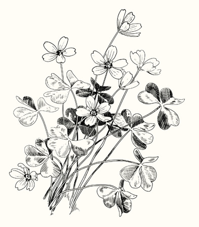 yellowed: spring design with forest flowers, vector