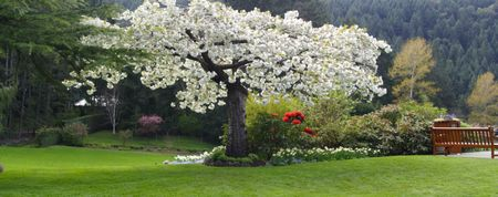 Beautiful panorama of a spring park blooming with apple trees & rhododendrons. Stock Photo
