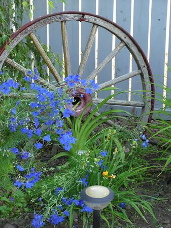 dainty: Antique wagon wheel fronted by dainty blue flowers.
