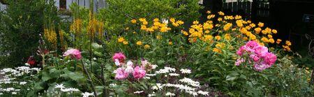 A summer,perennial garden panorama.