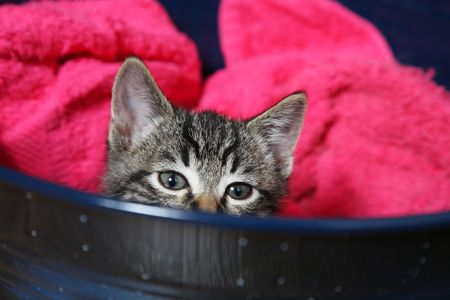 A cuus little tabby kitten peeks over the side of his bed. Stock Photo - 851406