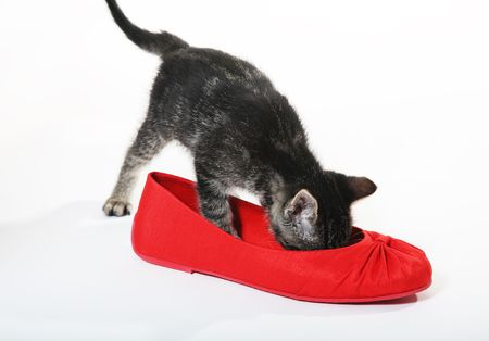 snooping: A curious, tabby kitten checks out a red shoe. Stock Photo