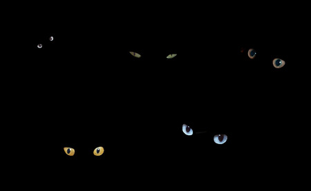 Cat eyes glowing in the dark. Stock Photo