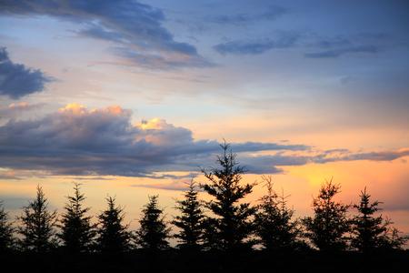 The sun sets as storm clouds begin to part over an evergreen windbreak.  Northern Saskatchewan, Canada. photo