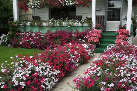 curb appeal: Curb appeal.  Hundreds of petunia blossoms add curb appeal to an old & tired character home. Stock Photo