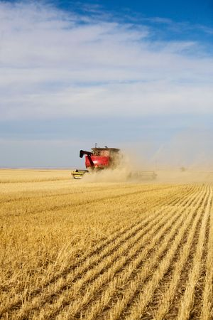 Dust, chaff swirl and create a haze around a combine harvesting a wheat field. photo