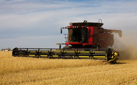 combining: A combine creates a swirling haze of dust & wheat chaff behind it, as it mows through the ready to harvest field.
