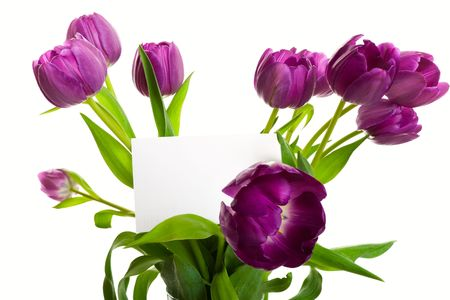 A bouquet of purple tulips with blank card.  Shot on white background. photo