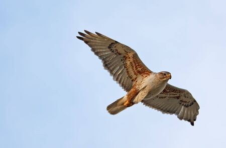 A Ferruginous Hawk flying with wings spread. Stock Photo - 5066411