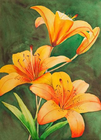 An original, watercolor painting of Saskatchewans provincial flower, the tiger lily.