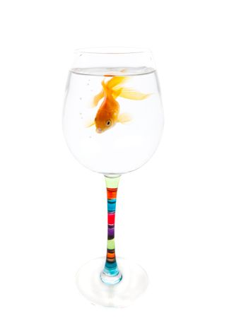 cramped: A goldfish whose home has become too small.  Conceptual.  Time to move to a bigger home.  Shot on white background. Stock Photo