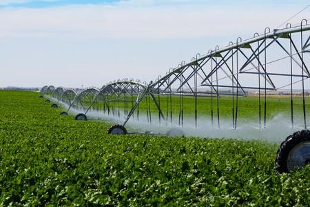 カブの分野に水をまく潅漑ピボット。 写真素材