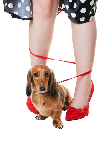 A red dachshund on a leash, tangled around his owners legs.  Shot on white background.
