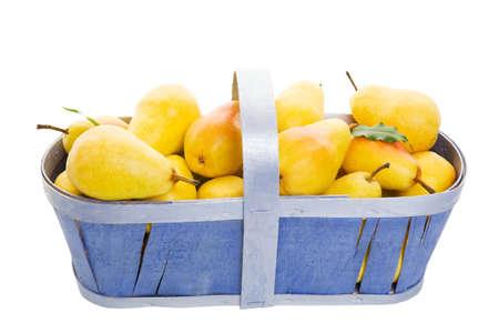 bushel: Freshly picked Bartlett pears in a periwinkle blue basket