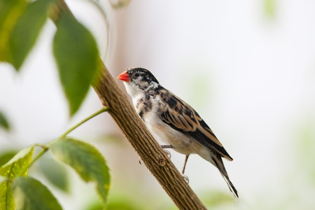 A tiny little finch resting on a branch  photo