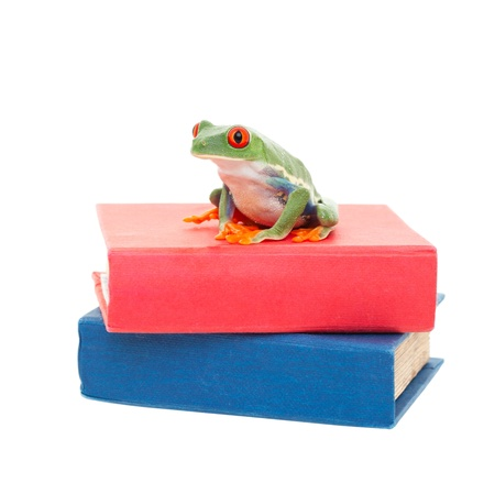 redeyed tree frog: A red-eyed tree frog sitting on a stack of text books   Science learning concept  Stock Photo