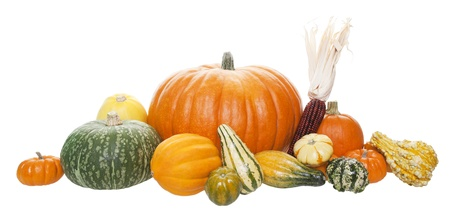 An arrangement of freshly harvested pumpkins, squashes, and gourds   Shot on white background  Imagens