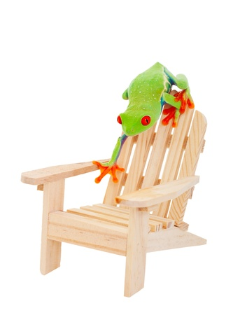 Tropical vacation concept   A Red-Eyed Tree Frog on an Adirondack chair   Isolated with clipping path  photo