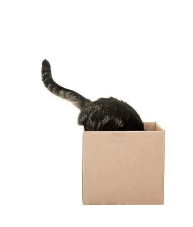 out of a box: A curious tabby cat checking out a cardboard box    Shot on white background  Stock Photo