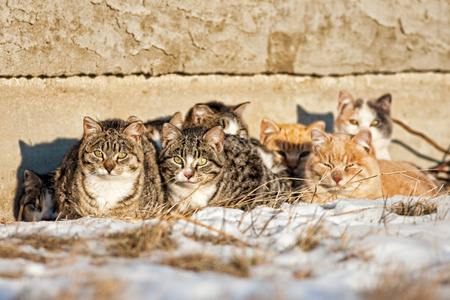 stray: A group of feral cats huddled together to keep warm, near the wall of an old abandoned home .  Taken during -20C weather. Stock Photo