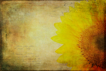 distressed: Sunflower with a vintage textured and distressed look.