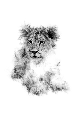 white work: Original art work of a lion club in black and white.