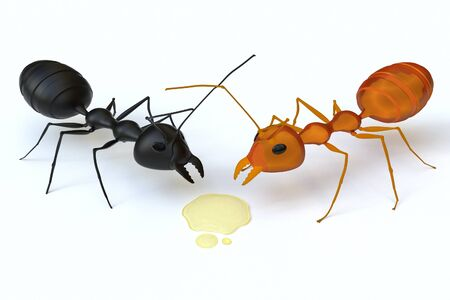 A black ant is confronted with an orange ant for the syrup. Stock Photo